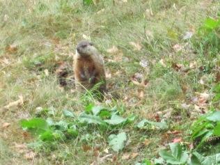 groundhog-6